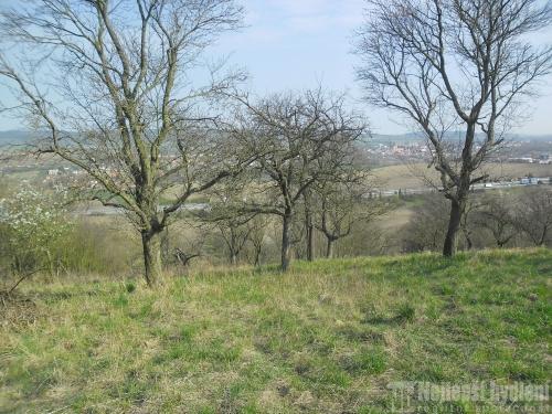 Brno PozemkyZahrada se sadem 1025m2, Rousínov
