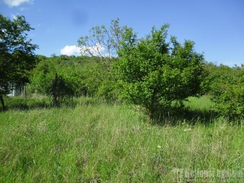 Prodej pozemek 2550 m2 - sad, Židlochovice