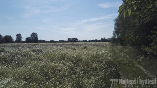 Bez realitky4 zemědělské pozemky o CP 9.131 m2  Borek, Praha - východ